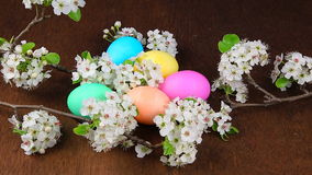 Easter eggs on a flowering tree branch stock video footage