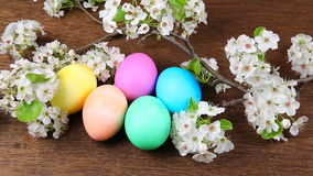Easter eggs on a flowering tree branch stock video