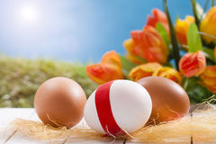 Easter eggs with flowers. Sunny easter still-life with eggs and flowers Stock Photo