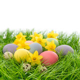 Easter eggs and flowers in grass over white Royalty Free Stock Photos