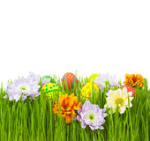 Easter eggs and flowers in green grass Stock Photos