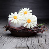 Easter eggs and flowers in a nest Royalty Free Stock Image