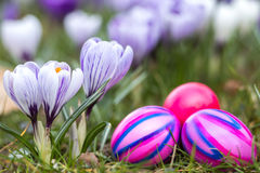Easter eggs and flowers. Traditional Easter eggs painted in different colors next to Crocus flowers in spring royalty free stock photography