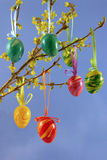Easter eggs on a forsythia bough Stock Photo