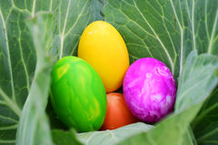 Easter Eggs with Fresh Green Grass over white background Stock Photos