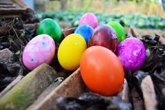 Easter Eggs with Fresh Green Grass over white background Royalty Free Stock Photography