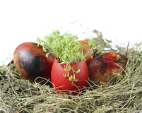 Easter eggs with garden cress Stock Image