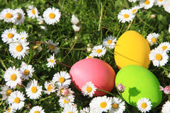 Easter eggs in the garden Royalty Free Stock Photo