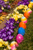 Easter eggs in the garden. A row of Easter eggs next to blooming crocuses Stock Image