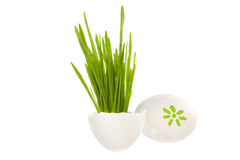Easter eggs with the grass Stock Photos