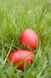 Easter eggs on grass Stock Photos
