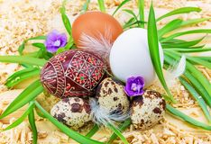 Easter eggs in the grass. With flowers Royalty Free Stock Photo
