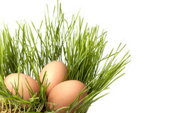 Easter eggs . The eggs in the grass Royalty Free Stock Images