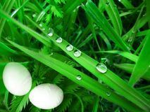 Easter eggs in the grass background Stock Image