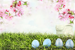 Easter Eggs in Grass. With beautiful Crab Apple blossoms hanging overhead. Extreme shallow depth of field with selective focus on eggs Royalty Free Stock Photography