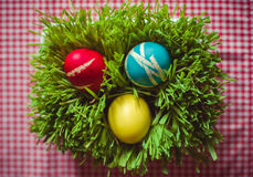 Easter eggs on grass Royalty Free Stock Photo