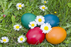 Easter Eggs in the Grass Closeup Stock Photography