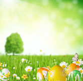 Easter eggs in grass. Colored easter eggs in grass. Free space for text Stock Photography