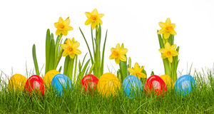 Easter eggs in grass. Easter eggs and daffodil flowers in grass Royalty Free Stock Images