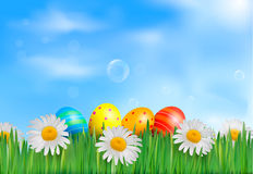 Easter eggs in the grass with daisies Stock Photos