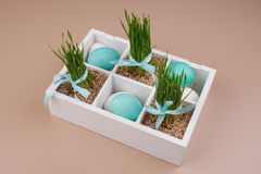Easter eggs with grass decoration in box Stock Photography