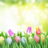 Easter eggs in grass. With tulips over garden background Stock Photos