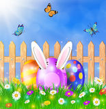 Easter eggs on a grass field with flower. On wooden fence background. Rabbit ears sticking out of the egg. Vector illustration Stock Photography