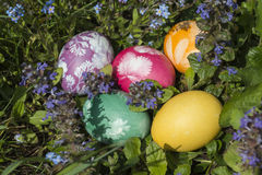 Easter eggs in the grass 8 royalty free stock photography