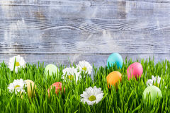 Easter Eggs in Grass stock photo