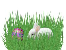 Easter eggs on grass isolated on white background Stock Images