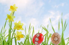 Easter eggs in  grass with narcissus Royalty Free Stock Photos