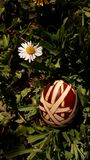 Easter eggs on grass. Picture of easter eggs on grass. Sunny day blue sky Stock Image