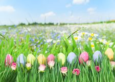 Easter eggs in grass. Row of easter eggs in grass with tulips over garden background Royalty Free Stock Images