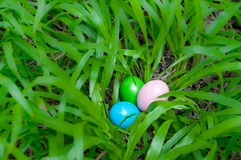 Easter eggs in grass shrub Royalty Free Stock Photography