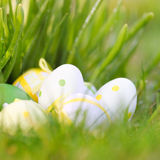 Easter eggs in grass square format Stock Image