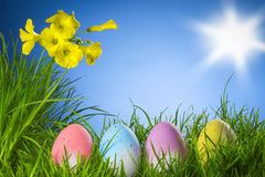 Easter eggs on grass, yellow flowers blue sky. Easter eggs on natural grass sun blue sky stock photo
