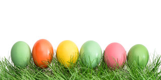 Easter eggs in grassover white background Royalty Free Stock Photography