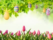 Easter Eggs in Green Branches Stock Photography