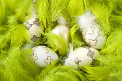 Easter eggs in green feathers Royalty Free Stock Images