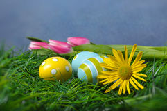 Easter eggs in green grass. And tulips daisies with copy space and blue background Royalty Free Stock Images