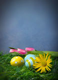 Easter eggs in green grass. And tulips daisies with copy space and blue background Stock Photography