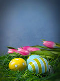 Easter eggs in green grass. And tulips with copy space and blue background Stock Photo