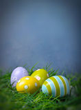 Easter eggs in green grass. With copy space and blue background Stock Image