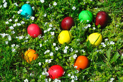 Easter eggs in green grass Royalty Free Stock Photo