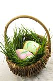Easter eggs with green grass Stock Images