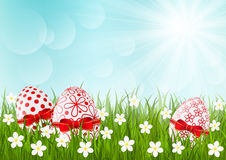 Easter eggs on green grass Stock Photos