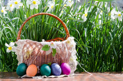 Easter eggs in green grass. Festive decoration. Happy Easter royalty free stock photos