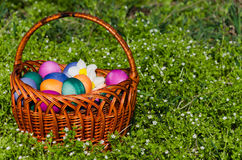 Easter eggs in green grass. Festive decoration. Happy Easter stock photos