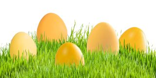 Easter eggs in green grass isolated royalty free stock photo