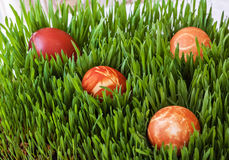 Easter eggs on green grass. Easter red eggs located on green grass Stock Images